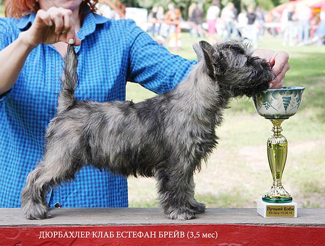 http://www.b-zennen.ru/cairns/news/IMG_2194v.jpg