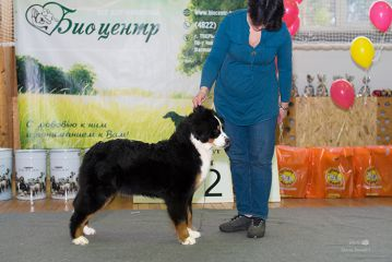класc щенков  very promising, 1 place, CW, Best puppi!!!